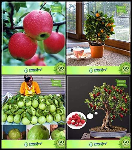 BloomGreen Co.. Las Semillas de la Planta Co BloomGreen Combo de ...