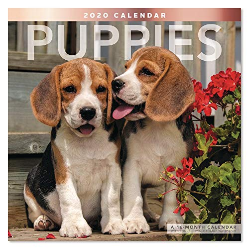 2020 Puppies Wall Calendar (LME1001020)