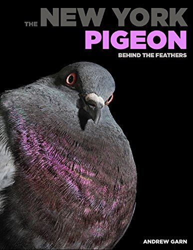 The New York Pigeon: Behind the Feathers
