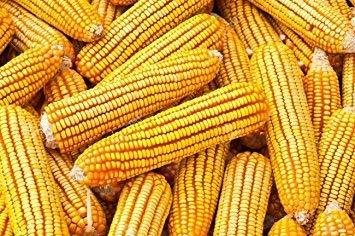 8LBS Iowa Corn