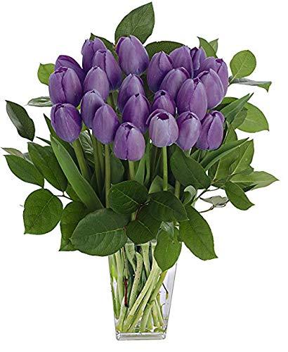 Stargazer Barn - Dynasty Bouquet - 2 Dozen Purple Tulips With Clear Vase - Farm Fresh