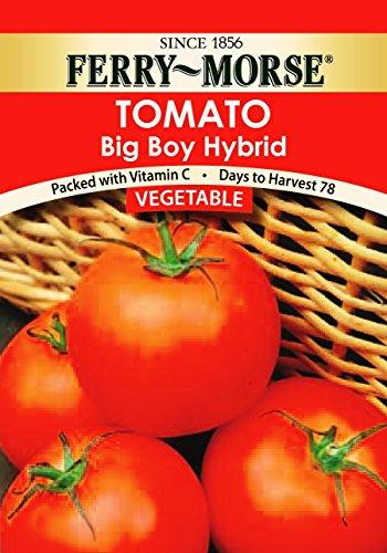 Ferry Morse Big Boy Tomato Seed Packet (Ferry Morse Tomato Seed)