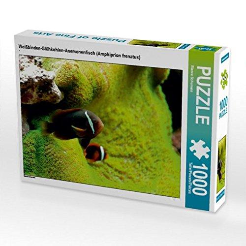 Weißbinden-Glühkohlen-Anemonenfisch (Amphiprion frenatus) 1000 Teile Puzzle Quer