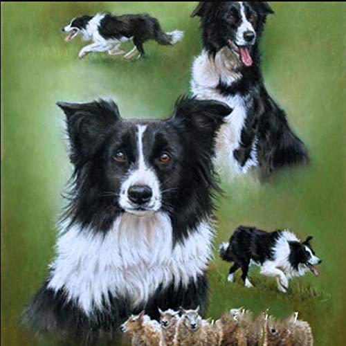 Border Collie Watercolor - CNIAO 5D DIY Diamond Embroidery Border Collie Sheep Mosaic Full Square Watercolor Cross Stitch Diamond Painting Cute Black Dog Animals-60x90cm