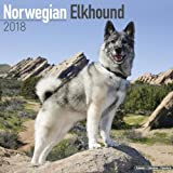 Norwegian Elkhound Calendar - Dog Breed Calendars - 2017 - 2018 wall Calendars - 16 Month by Avonside