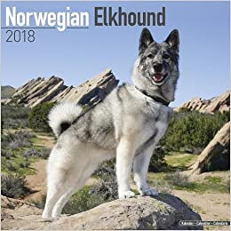 amazon norwegian elkhound calendar 2018 avonside publishing ltd