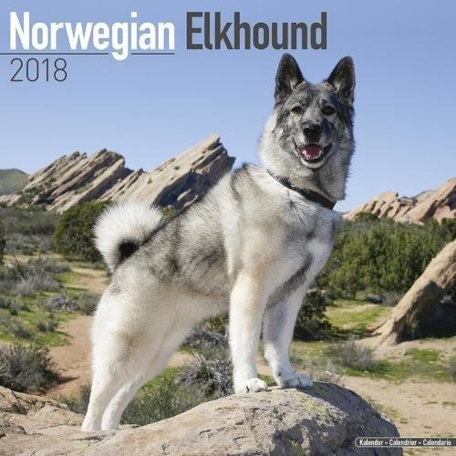 Norwegian Elkhound Calendar - Dog Breed Calendars - 2017 - 2018 wall Calendars - 16 Month by Avonside