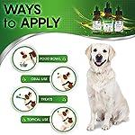 Natural ANTIBIOTICS for Dogs / ANTIBIOTICS Alternative for Pets/ Kennel Cough Medicine for Dogs / UTI Treatment / ANTIBIOTICS for Cats 14