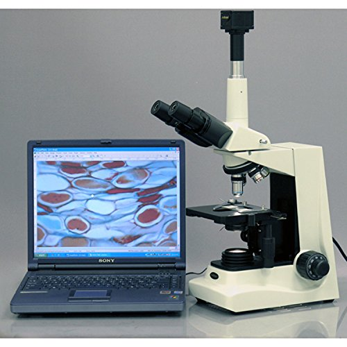 AmScope T600A-PCT-DK Professional Phase-Contrast Compound Trinocular Microscope, WF10x and WF16x Eyepieces, 40X-1600X Magnification, Brightfield/Darkfield, Halogen Illumination, Abbe Condenser, Double-Layer Mechanical Stage, Anti-Mold, 110V, Includes 4 Phase Contrast Objectives and Turret