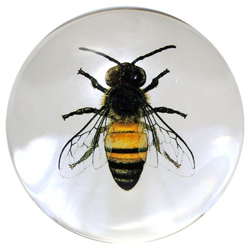 Glass Dome Paperweights 3 DIA (Clear Bee)