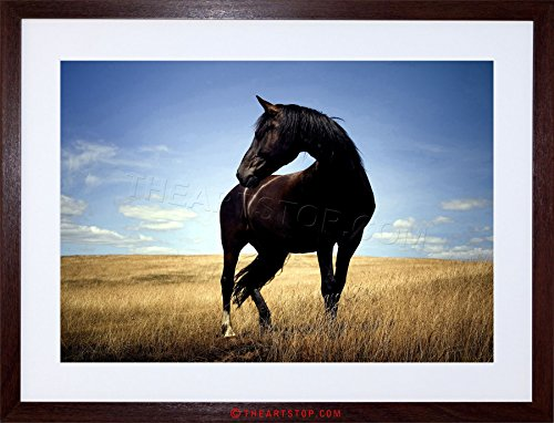 Photo Black Horse Stallion Field Framed Print F97x2818