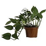 Lexi Home Indoor/Outdoor Water Globes for Plants