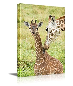 wall26 – Wild Animals Canvas Prints Series -Giraffes Stretched and Ready to Hang – 16 x24