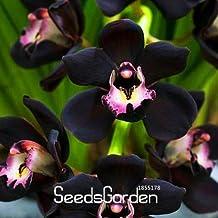 New Seeds 2015!100 PCS/Pack Unique Black Cymbidium Faberi Flower Seeds Garden Flowering Plants Orchid Seeds,#M93UKN