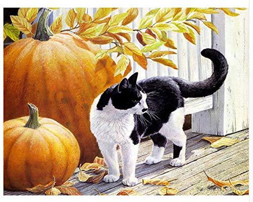 Agolong DIY Malen nach Zahlen Bunte Katze Acryl Malerei Moderne Bild Home Decor für Wohnzimmer Mit Rahmen 40x50cm B07L9YDG7C   Ab dem neuesten Modell