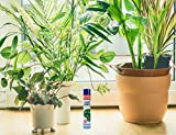 Chrysal Leaf Shine Spray - Adds Protective Layer