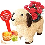 母の日 の プレゼント カーネーション 鉢花 花スイーツセット アニマル 動物 犬 3号鉢 (カーネーション赤×イヌ白)