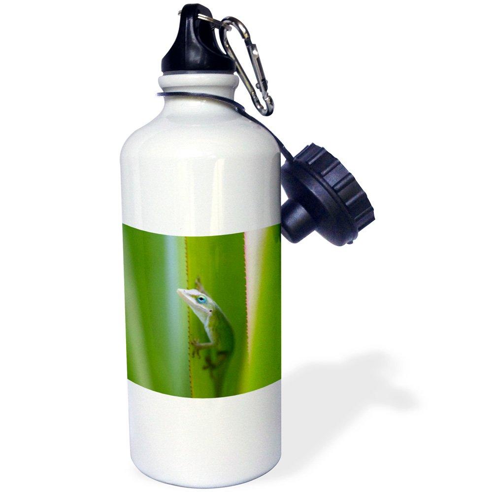 21 oz Frazier Sports Water Bottle USA-US12 DFR0147-David R Frazier Sports Water Bottle Hawaii 3dRose wb/_143919/_1Green anole White USA-US12 DFR0147-David R Kauai arboreal lizard