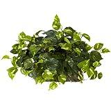 Nearly Natural 6708 Pothos Ledge Set on Foam Decorative Silk Plant, Green