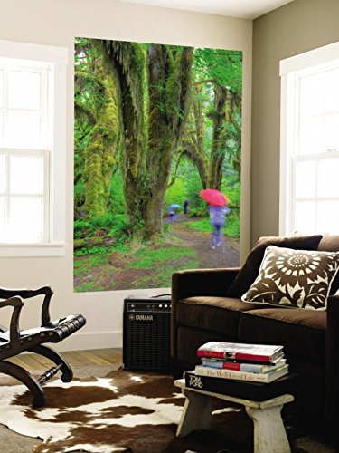 Hall of Mosses, Hoh Rain Forest, Olympic National Park, Washington, USA Wall Mural by Jamie & Judy Wild 48 x - Jamie Ol