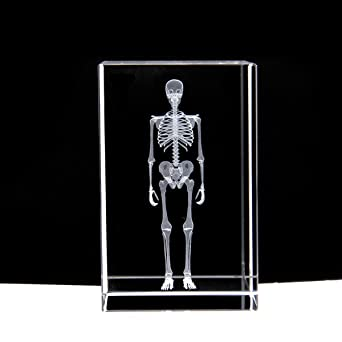 3D Human Skeleton Anatomical Model Paperweight(Laser Etched