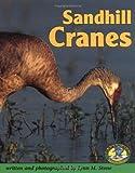 Sandhill Cranes, Lynn M. Stone, 0822530279