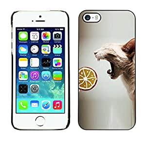 VORTEX ACCESSORY Hard Protective Case Skin Cover - sphynx oriental cat skinless breed lollipop - Apple iPhone 5 5S