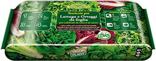 Sustrato para lechuga y hortalizas de hoja: Amazon.es: Jardín