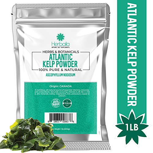 Kelp Powder 1 Lb, Natural Iodine Supplement (High Fiber) Raw Kelp Seaweed Extract from Canada, 100% Pure, non-GMO, Gluten-free & Kosher