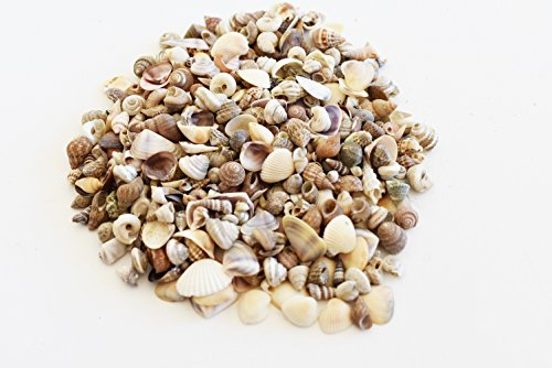 (FSG - 4 oz (400+) Tiny Indian Ocean Shell Mix Mini Shells 1/4