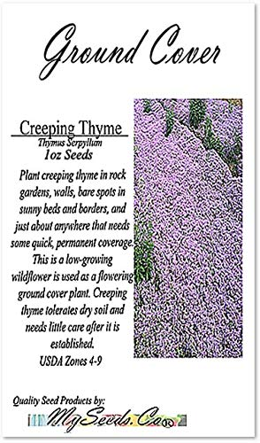 Creeping Thyme Herb (875,000+) Seeds - Thymus Serpyllum - Excellent Ground Cover - Non-GMO Seeds by MySeeds.Co (Creeping Thyme 4oz - 4,000 sq ft) by MySeeds.Co - Flower Seeds by the LB (Image #6)