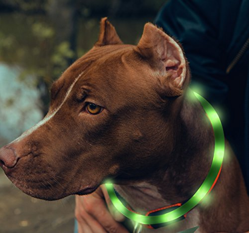 BSEEN LED Dog Collar – USB Rechargeable Glowing Pet Collar, Flexible Silicone Light Up Collars for Small Medium Large Dogs