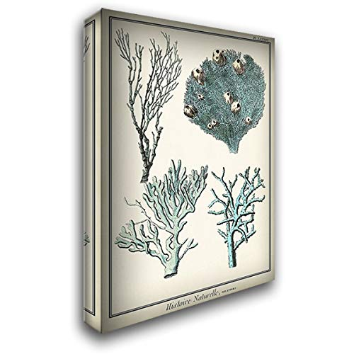 Oversize Coral Species II 48x72 Huge Gallery Wrapped Stretched Canvas Art by Vision Studio ()