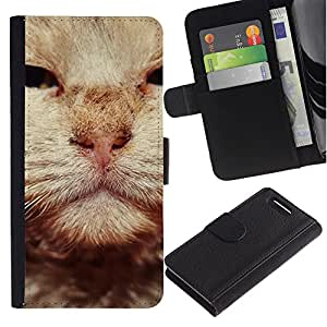 Stuss Case / Funda Carcasa PU de Cuero - British Wirehair Cat Orange Whiskers - Sony Xperia Z3 Compact