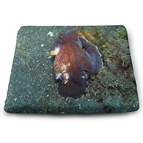 Seat Cushion Octopus Marginatus Chair Cushion Offices Butt Chair Pads for Cars/Outdoors/Indoor/Kitchens/Wheelchairs