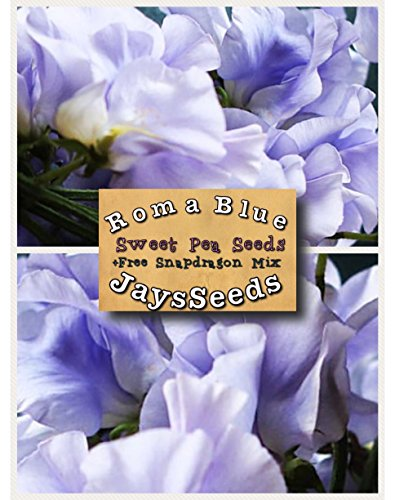 Roma Blue Sweet Pea Certified 35 Seed UPC 600188190199 + Free Pack Mixed Snapdragons