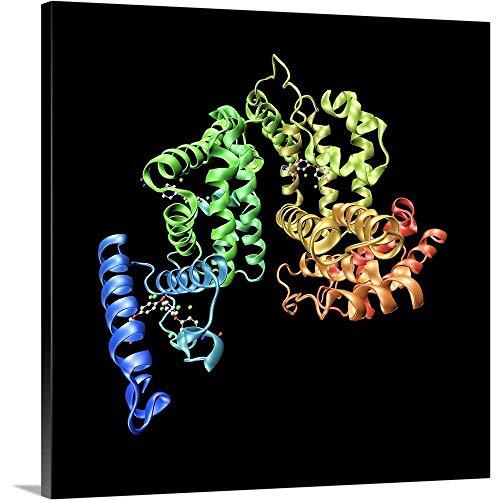 (Human serum Albumin Molecule Canvas Wall Art Print, 12