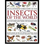 img - for Illustrated Directory of Insects of the World: A Visual Reference Guide to 650 Arthropods, Including All the Common Species Such as Beetles, Spiders, ... Butterflies, Moths, Grasshoppers and Flies by Martin Walters (2013) Paperback book / textbook / text book