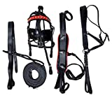 Equitem Black Economy Leather Small Mini Driving Cart Harness with Color Accent (Red Trim)