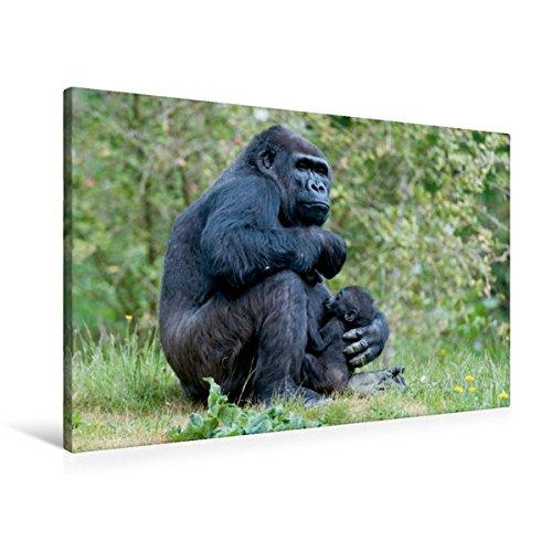 Calvendo Premium Textil-Leinwand 90 cm x x cm 60 cm Quer, Gorilla mit Baby   Wandbild, Bild auf Keilrahmen, Fertigbild auf Echter Leinwand, Leinwanddruck Tiere Tiere 6d0dfe