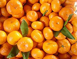 Seeds Package Not Plants: + Fresh Mediterran Mandarin/Willowleaf Mandarin / ×Deliciosa Seeds