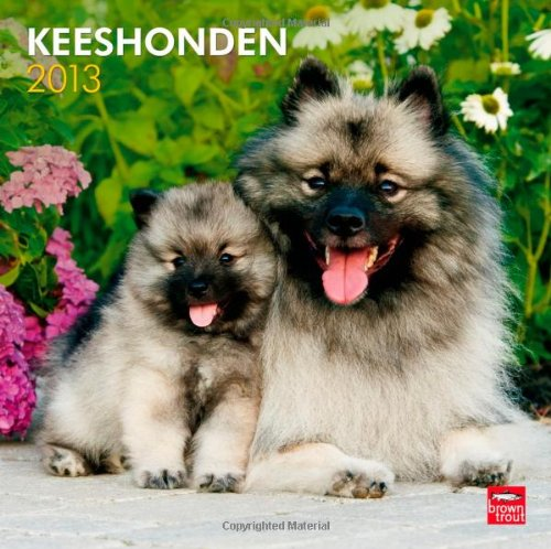 Download Keeshonden 2013 Square 12X12 Wall Calendar pdf