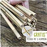 Bambusstäbe - Tonkinstäbe 120 cm/10-12 mm