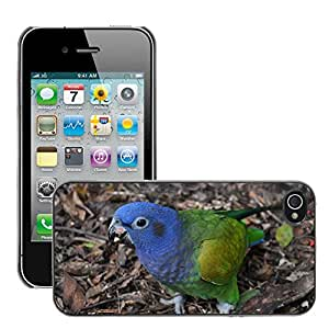 Etui Housse Coque de Protection Cover Rigide pour // M00109717 Loro Azul Brasil Pájaro tropical // Apple iPhone 4 4S 4G