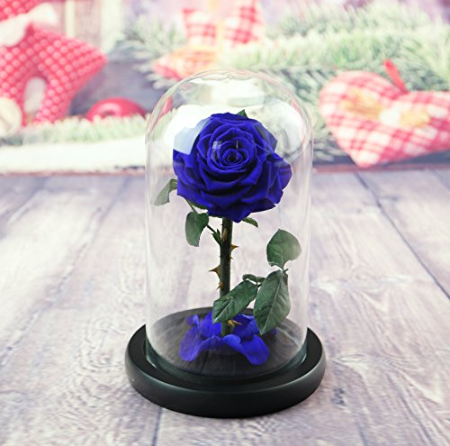 sexyrobot Beauty And The Beast Rose, Handmade Preserved Fresh Flower Real Rose with Fallen Petals in a Glass, with Exquisite Box for Valentine's Day, Mother's Day, Christmas (Blue) by sexyrobot (Image #1)
