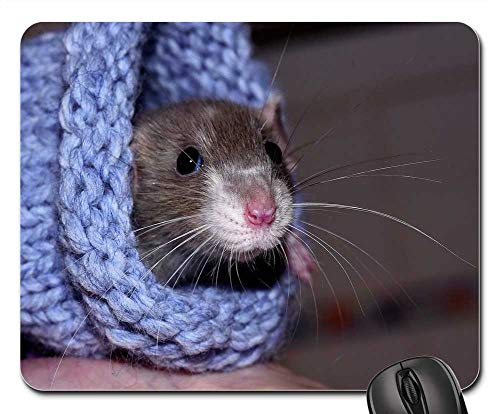 Mouse Pads - House Rat Color Rat Tame Warm Wool Cute ()