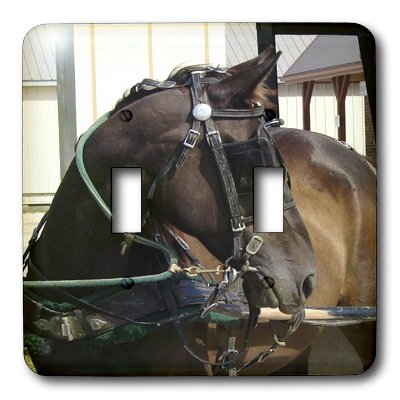 (3dRose lsp_6452_2 Amish Horse Photographed by Angelandspot Double Toggle Switch Multicolor)