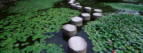 walls-360-peel-stick-wall-murals-water-lilies-in-a-pond-helan-shrine-54-in-x-20-in