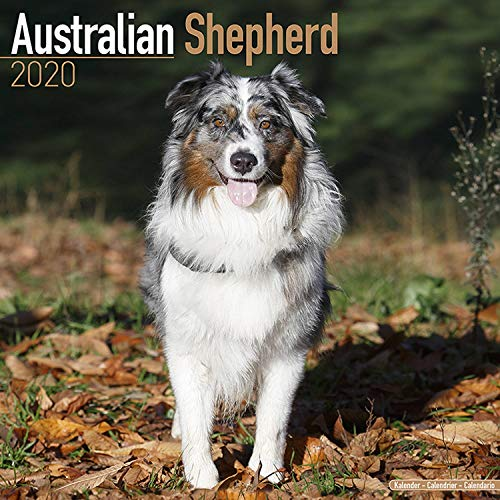 Australian Shepherd Calendar 2020 - Dog Breed Calendar - Wall Calendar 2019-2020
