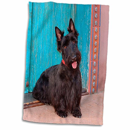 (3D Rose Scottish Terrier Sitting by Colorful Doorway MR TWL_208602_1 Towel, 15